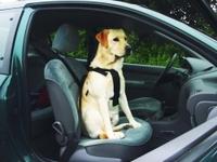 Pet Pro ШЛЕЯ В АВТОМОБИЛЬ для собак