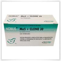 Нобилис Ма5+клон30, живая, 5 тыс