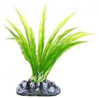 Aquatic Plants (Акватик Плэнтс) Аквариумное растение